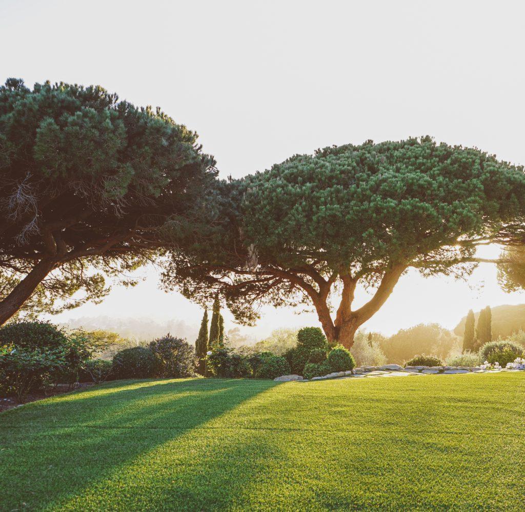 Lucious Lawn1